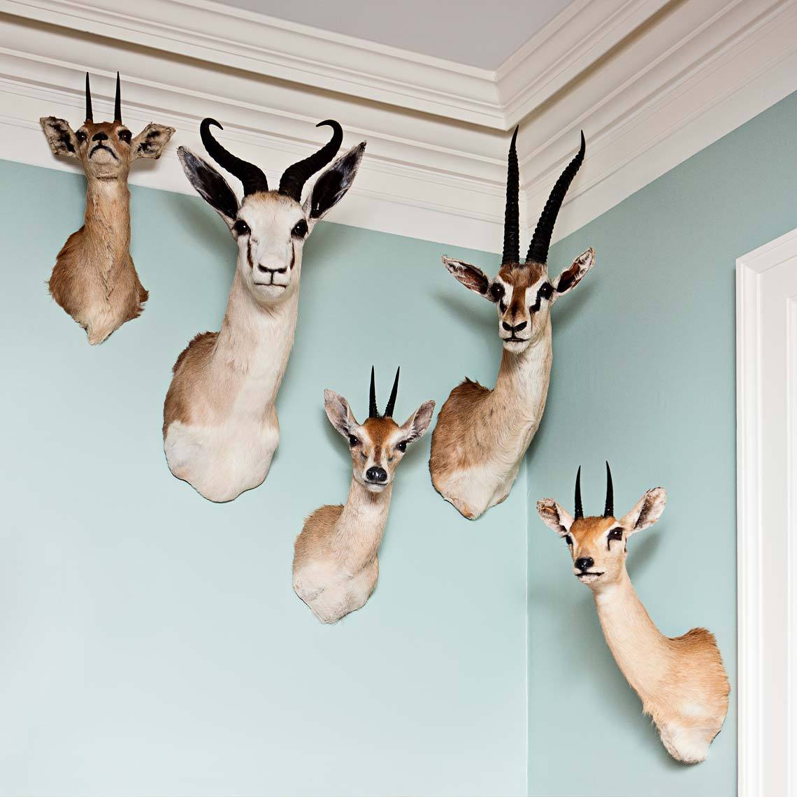Photography_taxidermy_interior_Atlanta