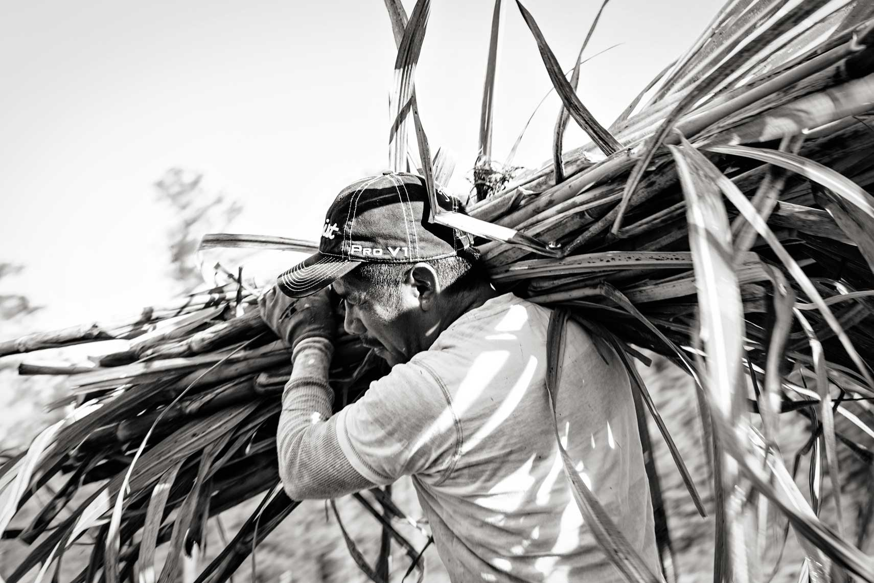 B+W lifestyle photograph of latino farmworker with load of sugarcane